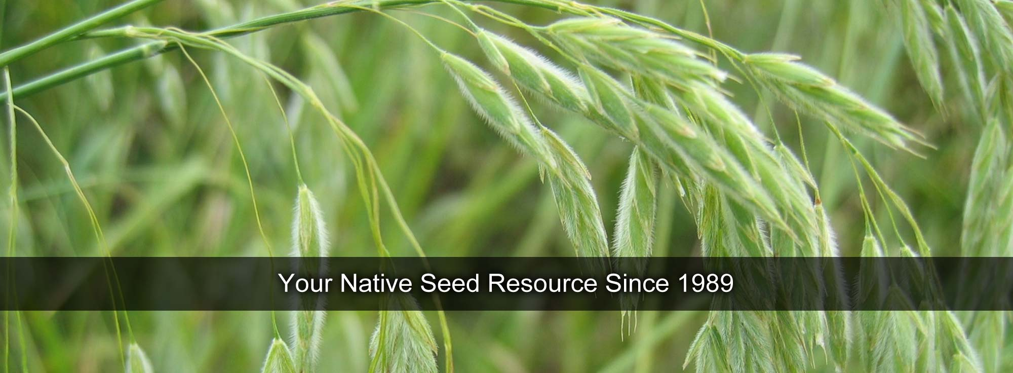 Your Native Seed Resource Since 1989