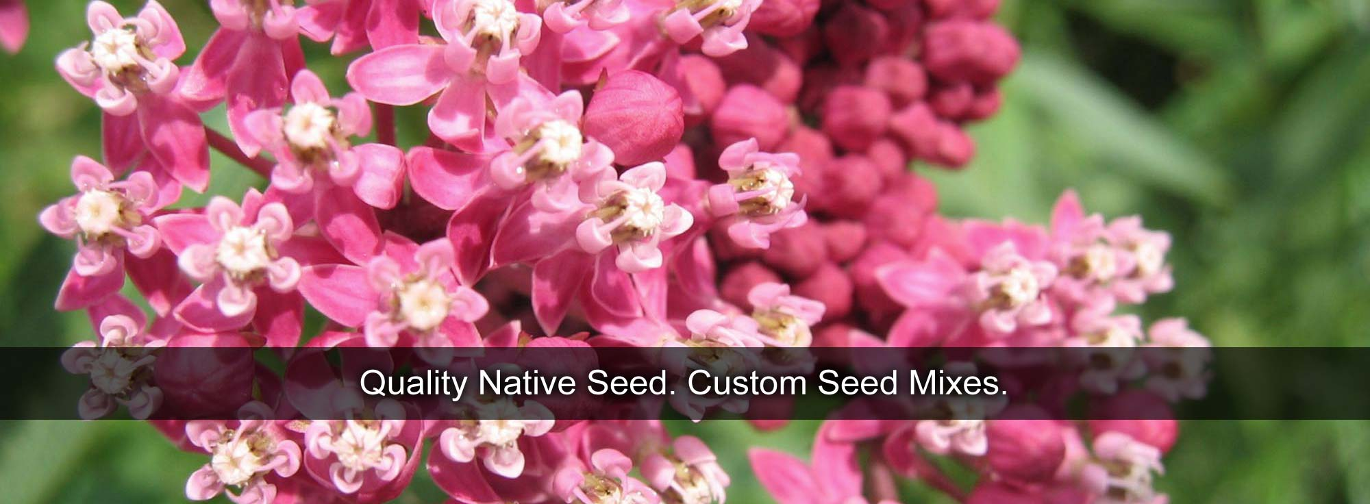Quality Native Seed. Custom Seed Mixes.
