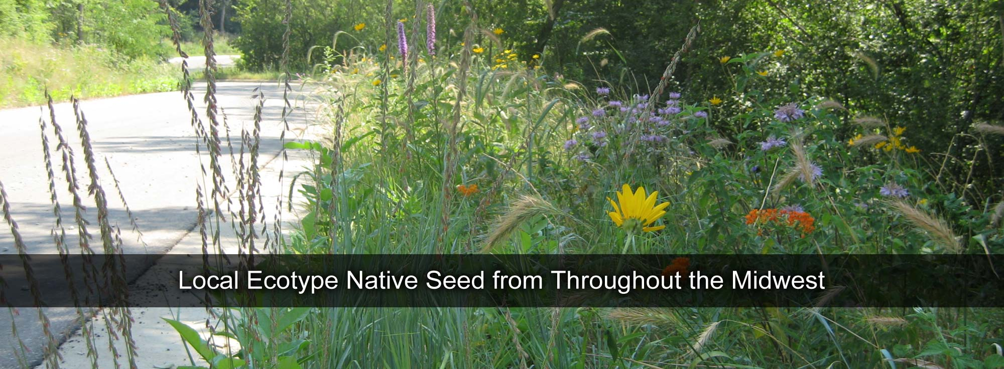 Local Ecotype Native Seed from Throughout the Midwest